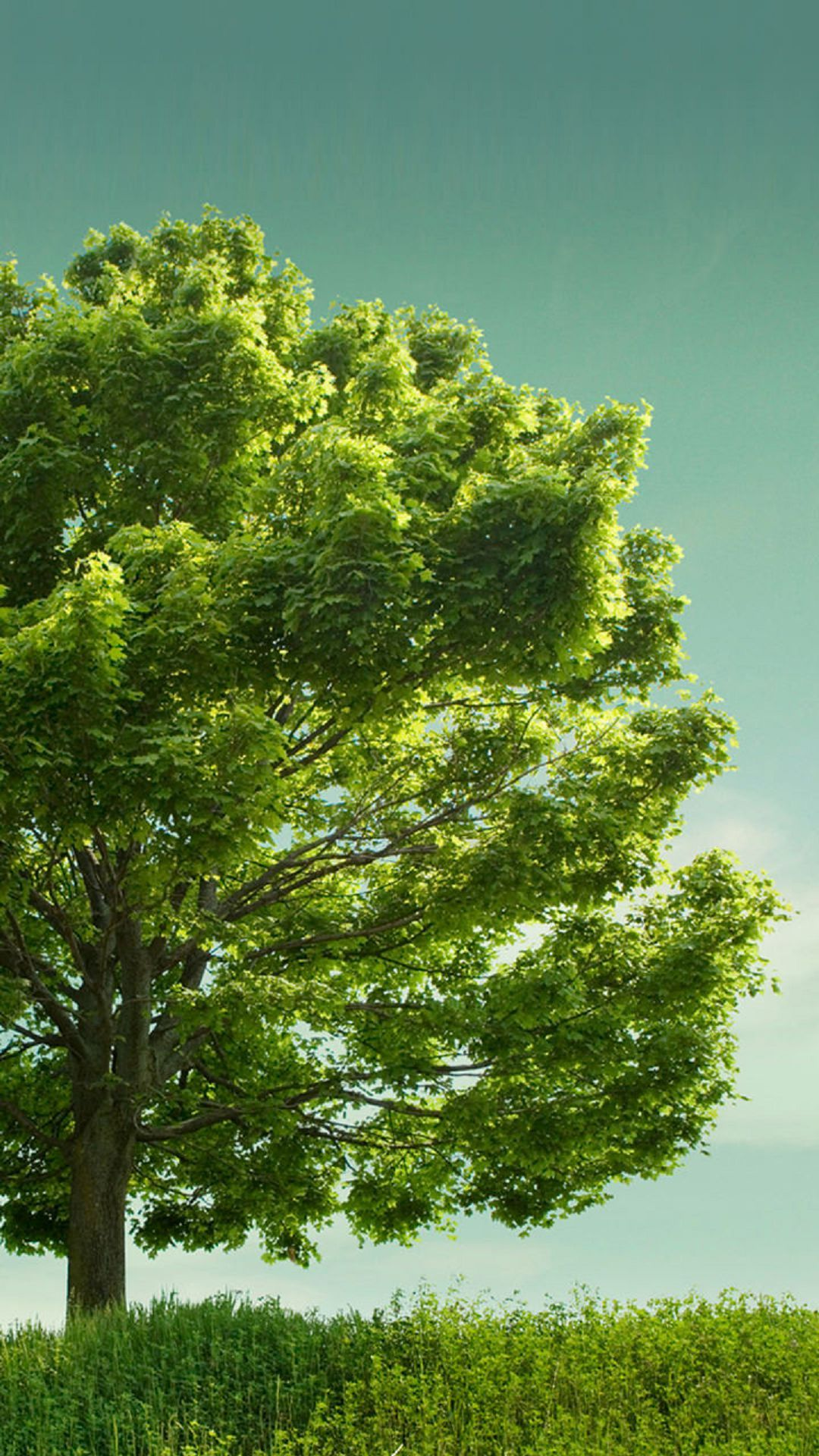 Big Green Tree Wallpaper Free Android Wallpapers