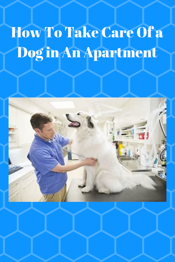 How To Take Care Of A Dog In An Apartment Pets Care Tips Apartment Dogs Apartment Pet Dogs