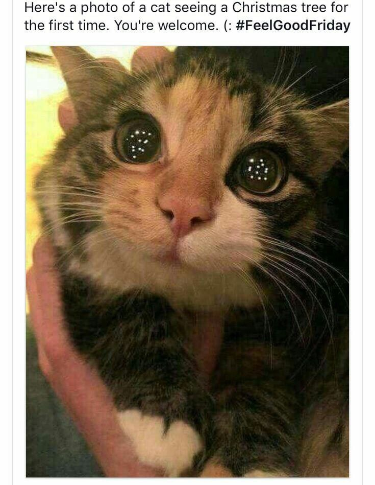 New Funny Cats Funny Animal Pictures Of The Day – 30 Pics Ep8 - Lovely Animals World Funny Animal Pictures Of The Day – 30 Pics E8 - Lovely Animals World 6
