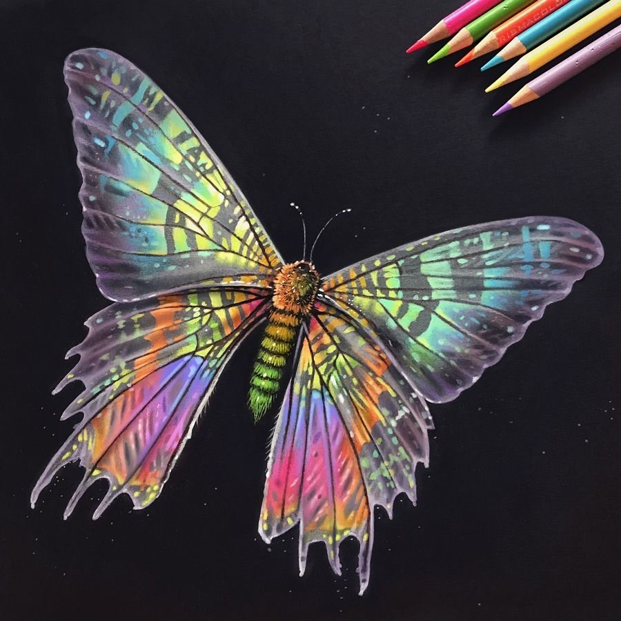 Iridescent Madagascan Sunset Moth Colored Pencil Drawing