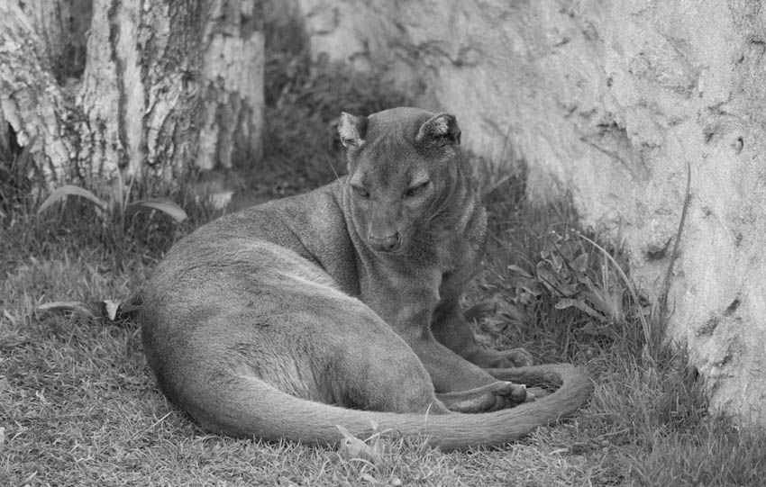 Enjoy these fantastic animals in their natural habitat in Bioparc of Valencia. Disfruta de estos fantásticos animales en su hábitat natural, en el Bioparc de Valencia.  http://www.valenciabusturistic.com/