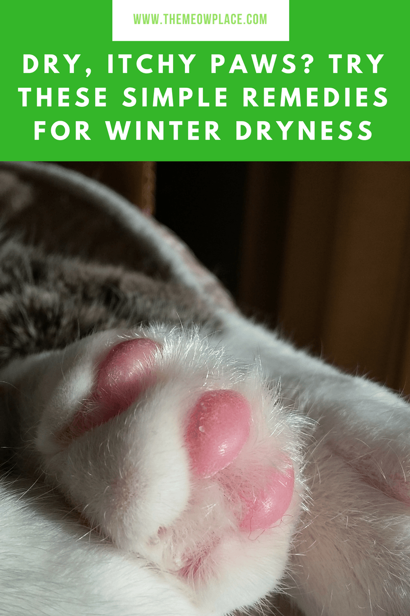 Dry Itchy Paws Try These Simple Solutions Your Cat Will Love Cat Care Dry Paws Paw Care