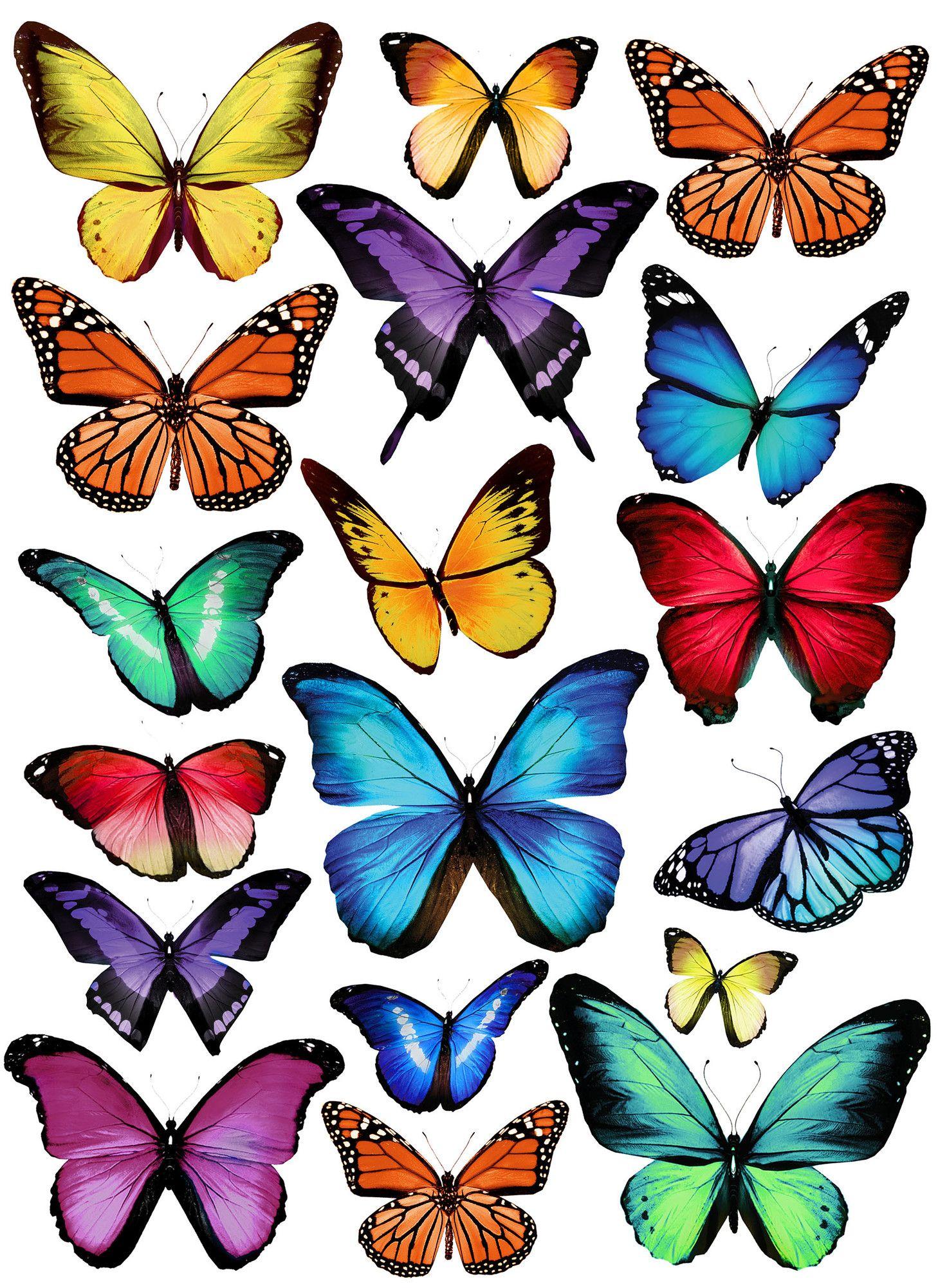 Papillion Multi Wall Art Kit