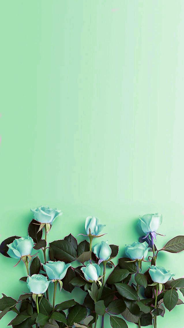 Green Iphone Wallpaper In 2020 Iphone Wallpaper Green Mint Green Wallpaper Mint Green Wallpaper Iphone
