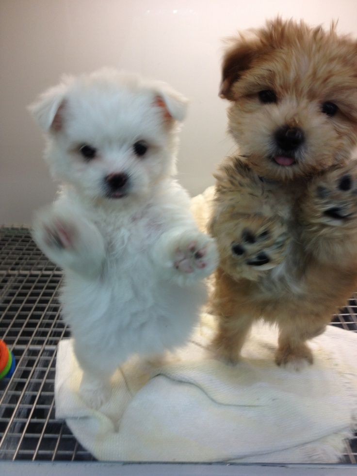 Puppies ! they are just too cute not to pin....