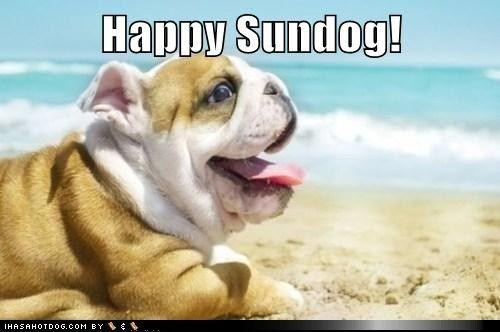 funny dog pictures - Happy Sundog!