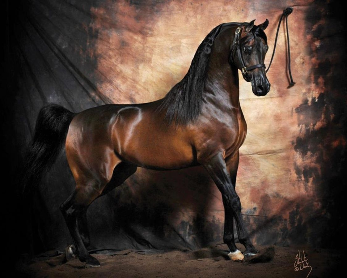 Must see Wallpaper Horse Dark Brown - 5f7abb0a1312bdf5639824e5b4845285  Perfect Image Reference_469628.jpg
