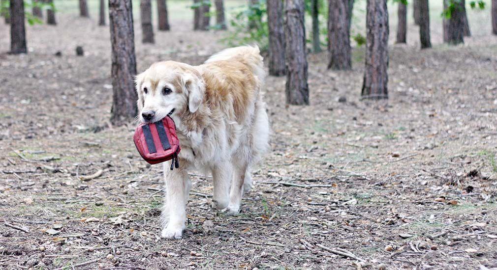 10 Tipps Fur Den Hund Im Alter Alter Hund Hund Beschaftigen Hunde