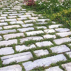Blumensamenmischung für Pflasterfugen Manufactum in 2020