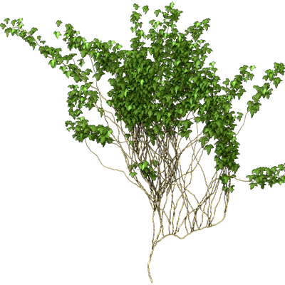 Png Vine Google Search Climbing Plants Plants Png
