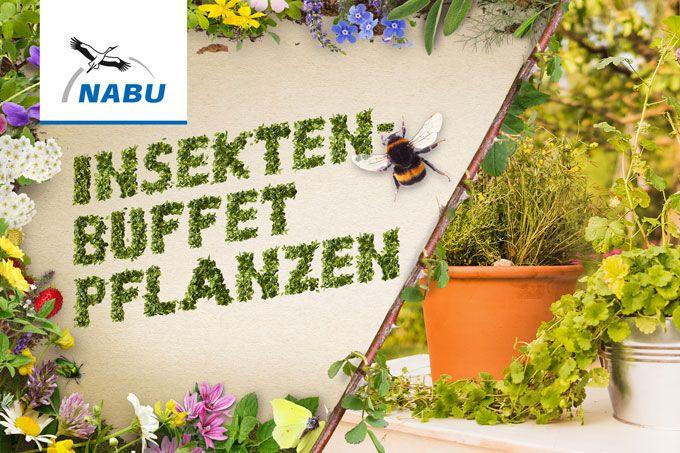 Gonn Dir Garten Nabu Pflanzen Insekten Bienenpflanzen