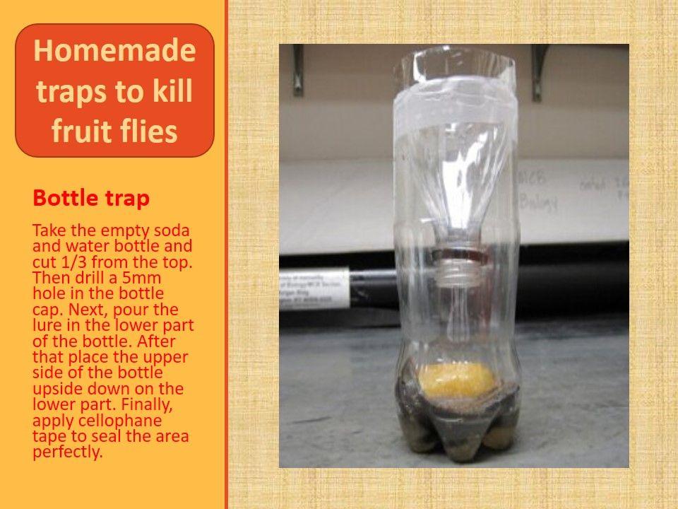 5 natural ways to kill fruit flies in home fruit flies