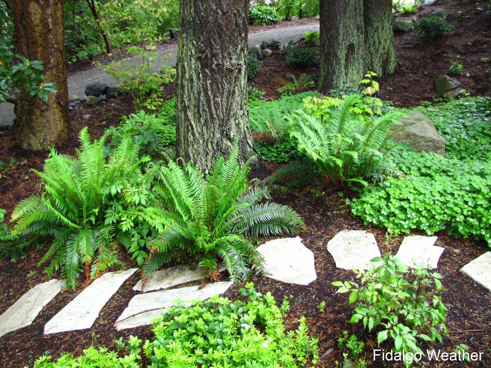 We need this path thru the woodland garden. | Shade garden, Shade ...