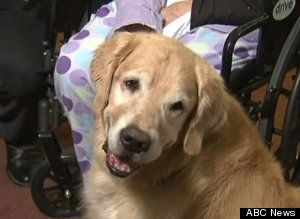 Golden Retrievers Tend To Owner For 2 Days After Fall Until Help