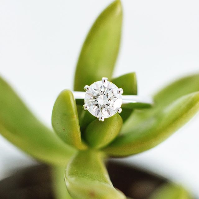 A stunning, 6-prong Tiffany style solitaire. Rings don't get more classic than this!This design is easily a team favorite for it's versatility, able to pair with any wedding band style thinkable.