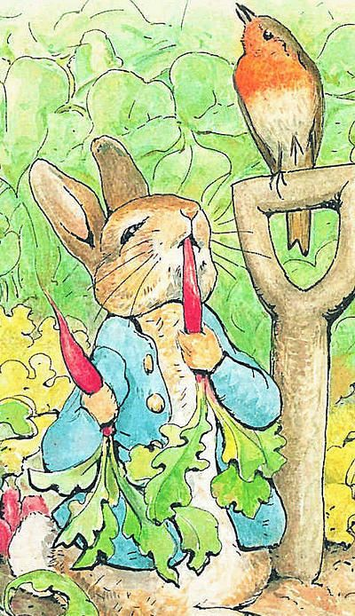 THE TALE OF PETER RABBIT WAS BEATRIX POTTER'S FIRST BOOK AND WAS PUBLISHED IN 1902