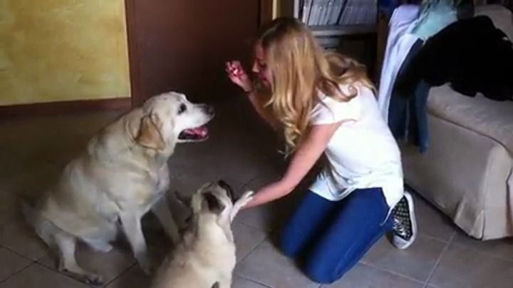 Good dogs!