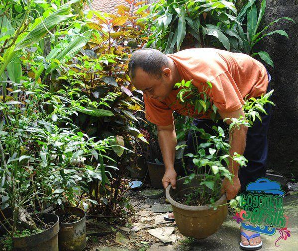 Warga Rt 05 Rw 07 Kel Ciwaringin Bogor Tengah Menghiasi Halaman Rumah Dengan Aneka Jenis Tanaman Bogorkubersih Tanaman Kota Bogor Jenis