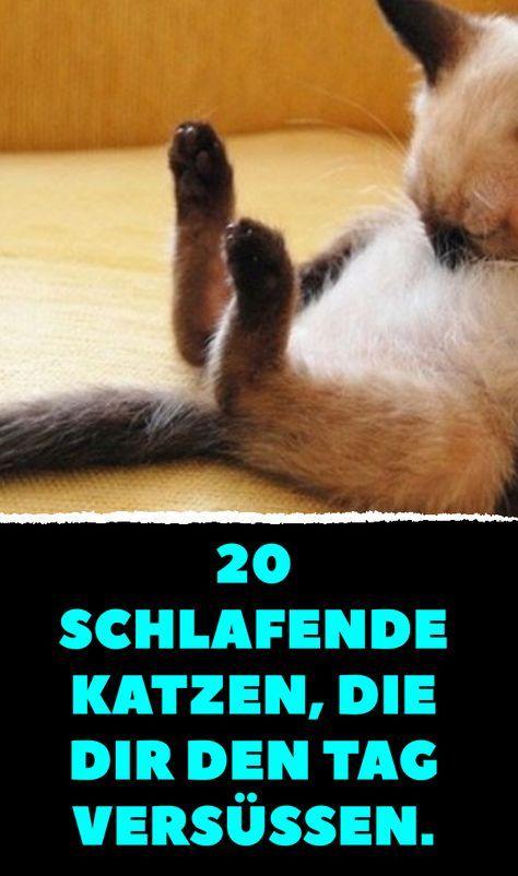 20 schlafende Katzen, die dir den Tag versüßen. #katzengeburtstag