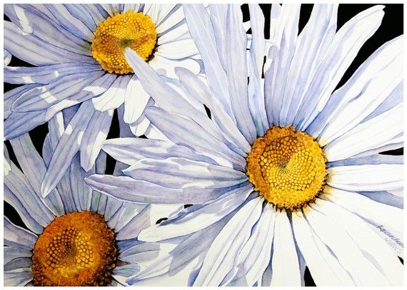 Daisies Fine Art Print Of Original Watercolor Painting By Kevan