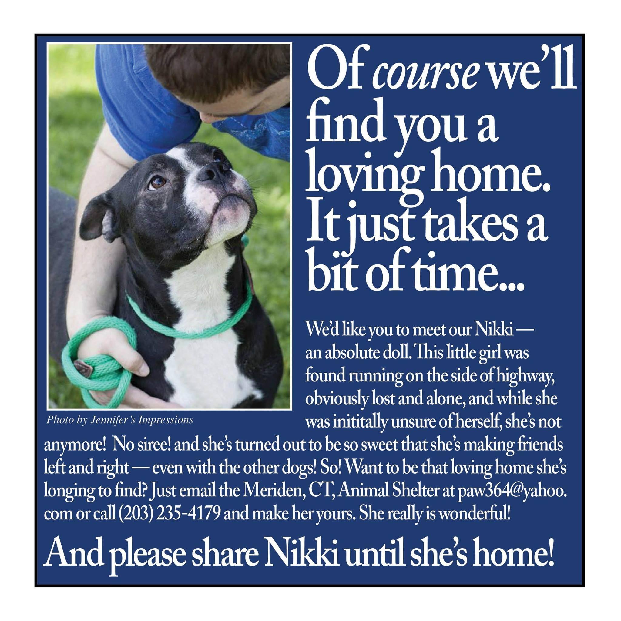 This Little Peanut Is Very Urgent Meriden Animal Shelter 311 Murdock Avenue Meriden Ct General Adoption Hours Hours Mon Shelter Dogs Animal Shelter Dogs