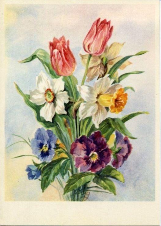самки тюльпаны и нарциссы рисунки можно