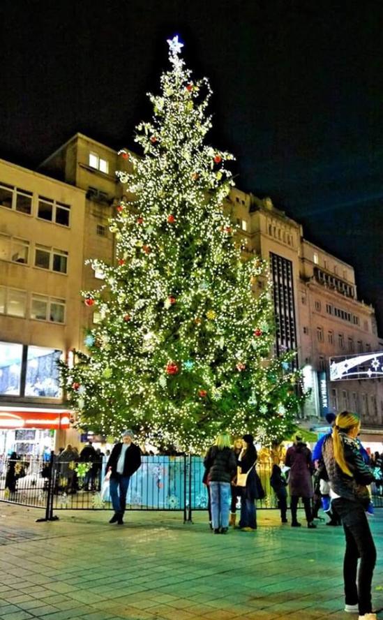 England Christmas Tree.My City Of Liverpool England Christmas Tree In The City