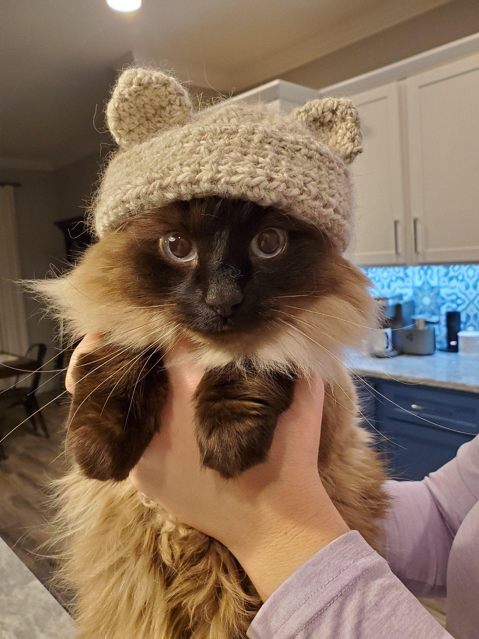 Michael S Cat On Twitter Cat Fur Cat Hat Cat Diy