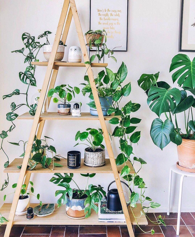 Fabriquer Une Étagère Pour Plantes diy printanier : une échelle pour fabriquer une étagère