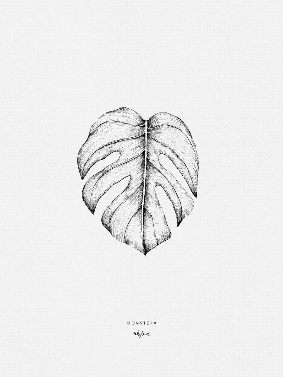 Monstera Leaf Drawing Monstera Deliciosa And Symbols