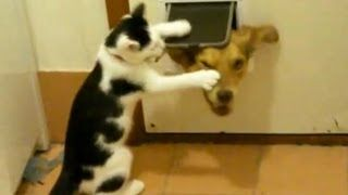 Cats Can Be Jerks, via YouTube.