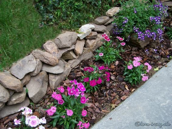 Ideas For Thin Flower Bed Along Sidewalk Landscaping With Rocks