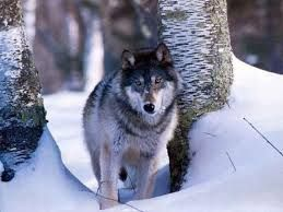 Картинки по запросу фото животные зимой