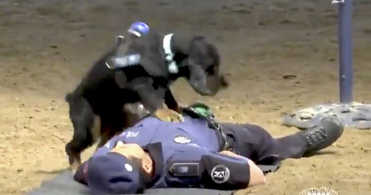 Dog performs CPR on 'collapsed' officer in adorable video