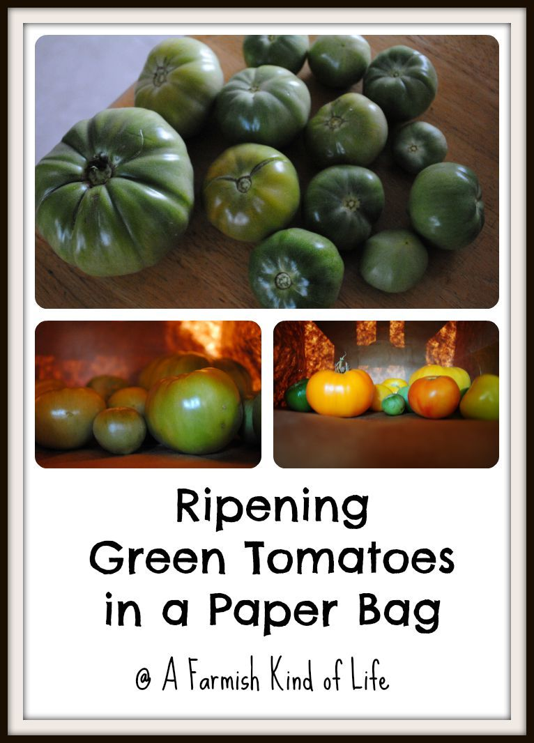 Stubborn Green Tomatoes Ripen Them In A Paper Bag