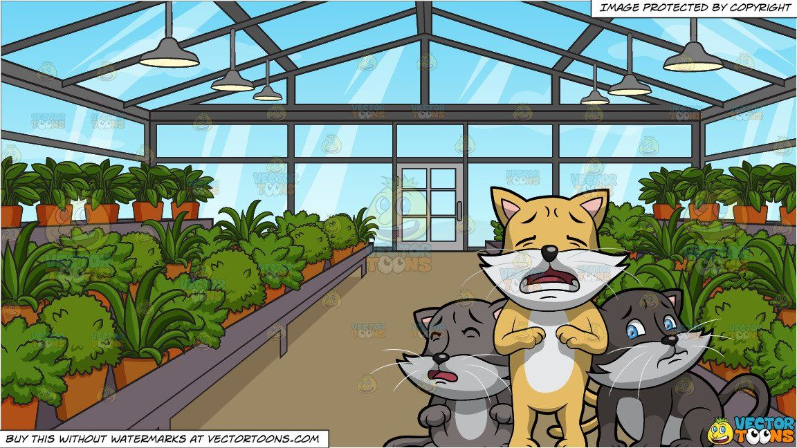 Three Little Kittens Have Lost Their Mittens And Inside A Greenhouse Background Little Kittens