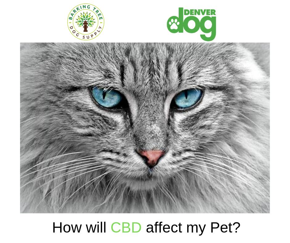 CBD Helped Me Get A Normal Cat Cats, Your pet, Pets