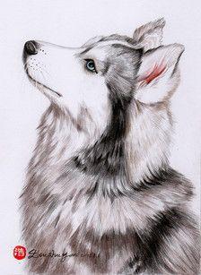 彩铅哈士奇 Dog Drawing Puppy Art Animal Drawings