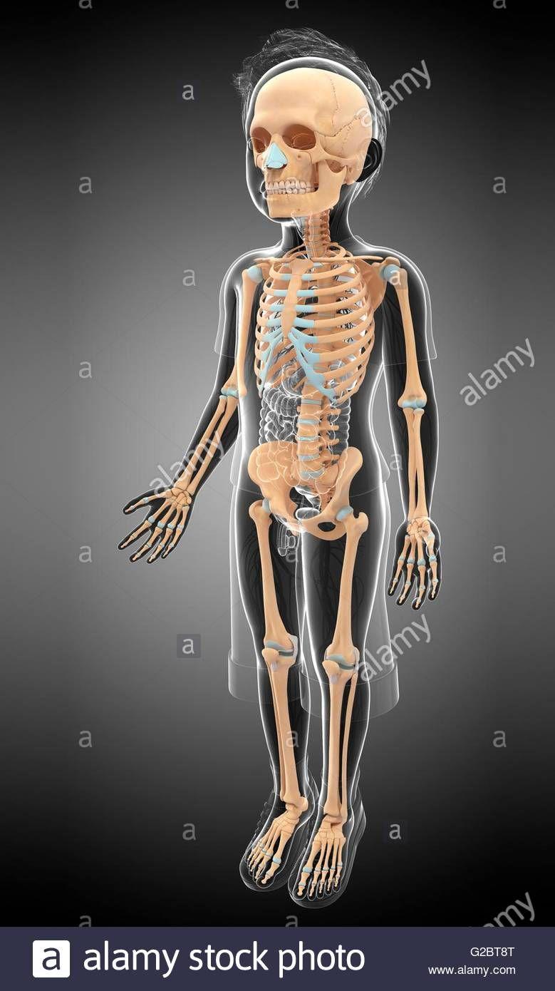Image result for skeletal system medviz skeletal system pinterest image result for skeletal system fandeluxe Choice Image