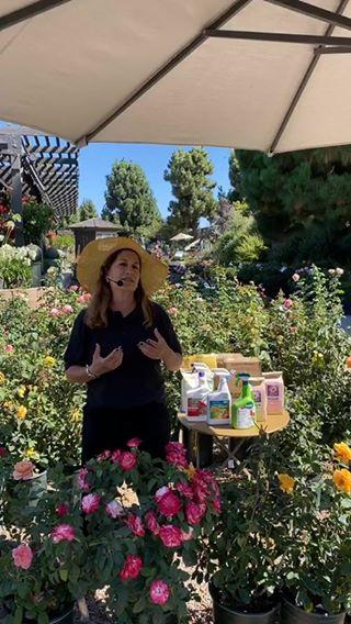 Roger S Gardens Rogersgardens Instagram Photos And Videos Rogers Gardens Rose Care Social Media Community