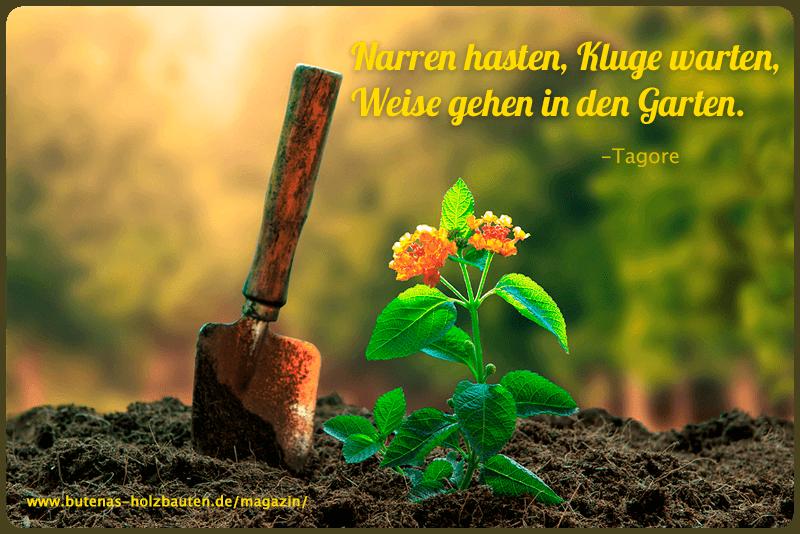 Narren Hasten Kluge Warten Weise Gehen In Den Garten Mit Bildern Gartenspruche Nachdenkliche Spruche Spruche