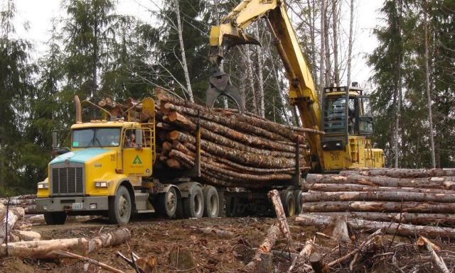 d8h+in+the+woods | Weyerhaeuser Company Logging Operations | logging
