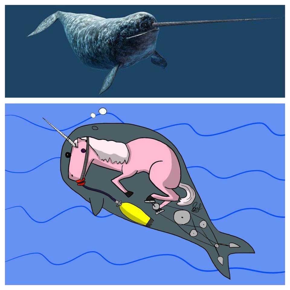 Narwhal and unicorn cartoon narwhal jokes funny pictures - Narwhal Nope Unicorn
