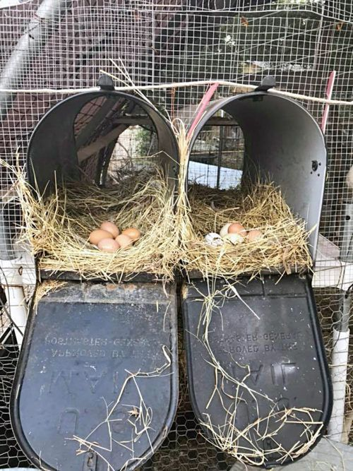Photo of 50+ Surprising Chicken Nesting Box Ideas – Backyard Poultry