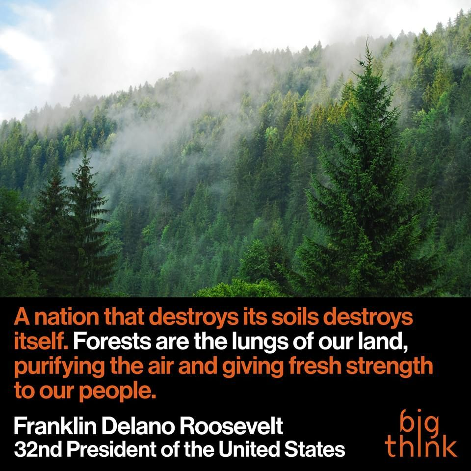 Franklin D Roosevelt Quotes Words Of Wisdom From Franklin Droosevelt Quotes  Nature