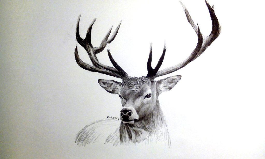 Charcoal Drawing Of A Deer By Alexmik Deviantart Com On