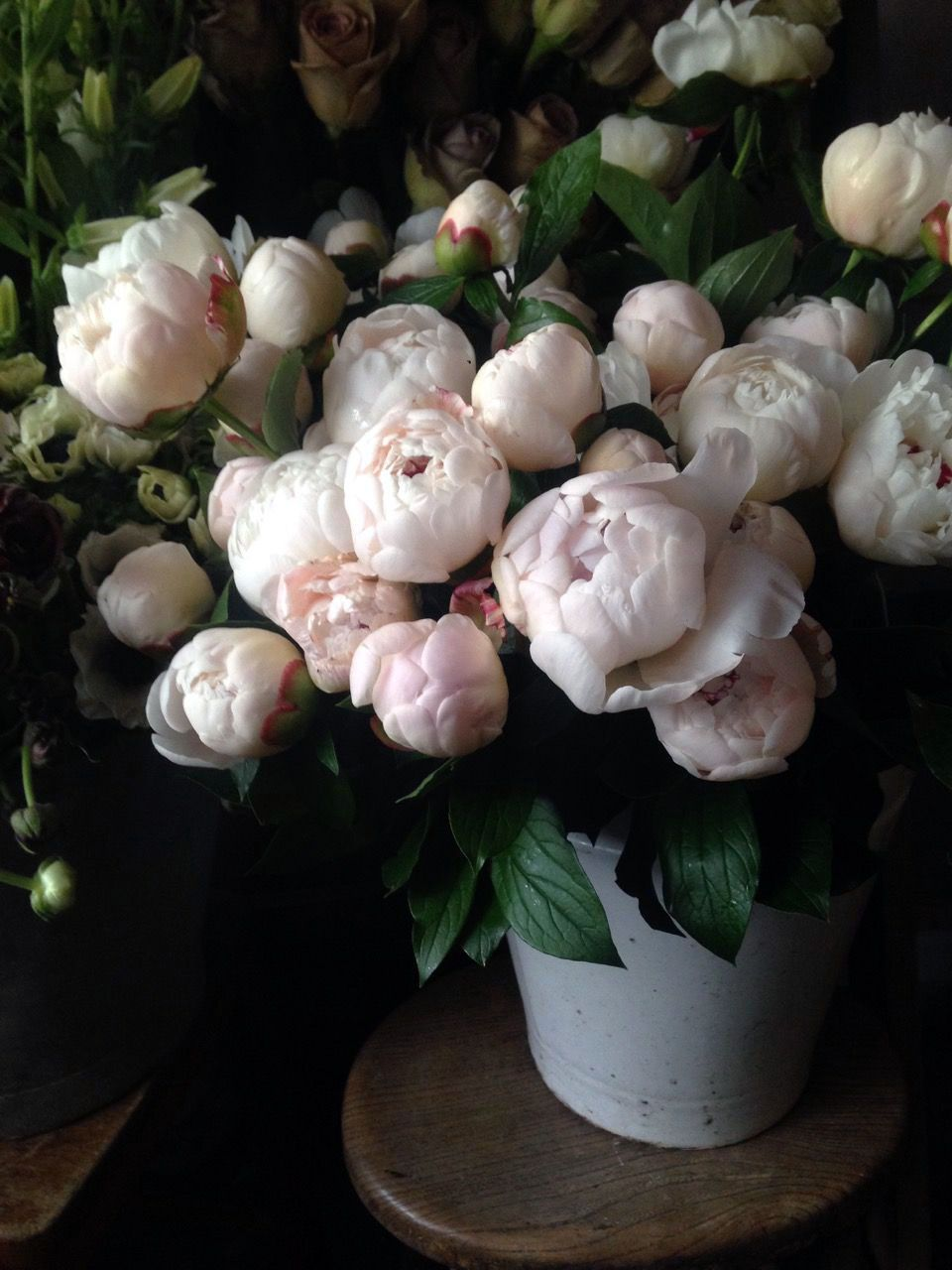 Ways To Decorate A Peony Flower Name In Telugu To Refresh Your Home Flowers Beautiful Flowers Pretty Flowers