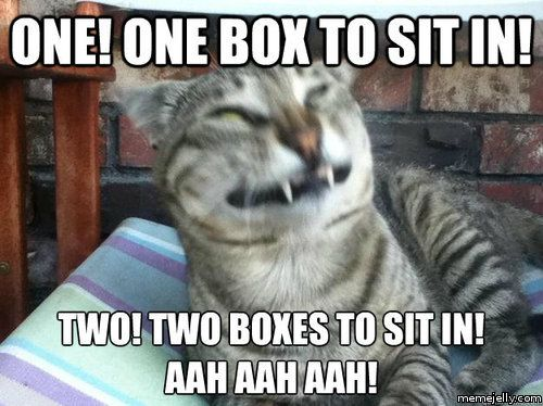 Funniest Meme Tumblr : Funny cat memes tumblr 6 funny images and funny pictures