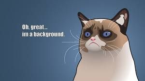 Image Result For Cat Wallpapers For Chromebook Funny Cat Compilation Funny Cats Cat Wallpaper