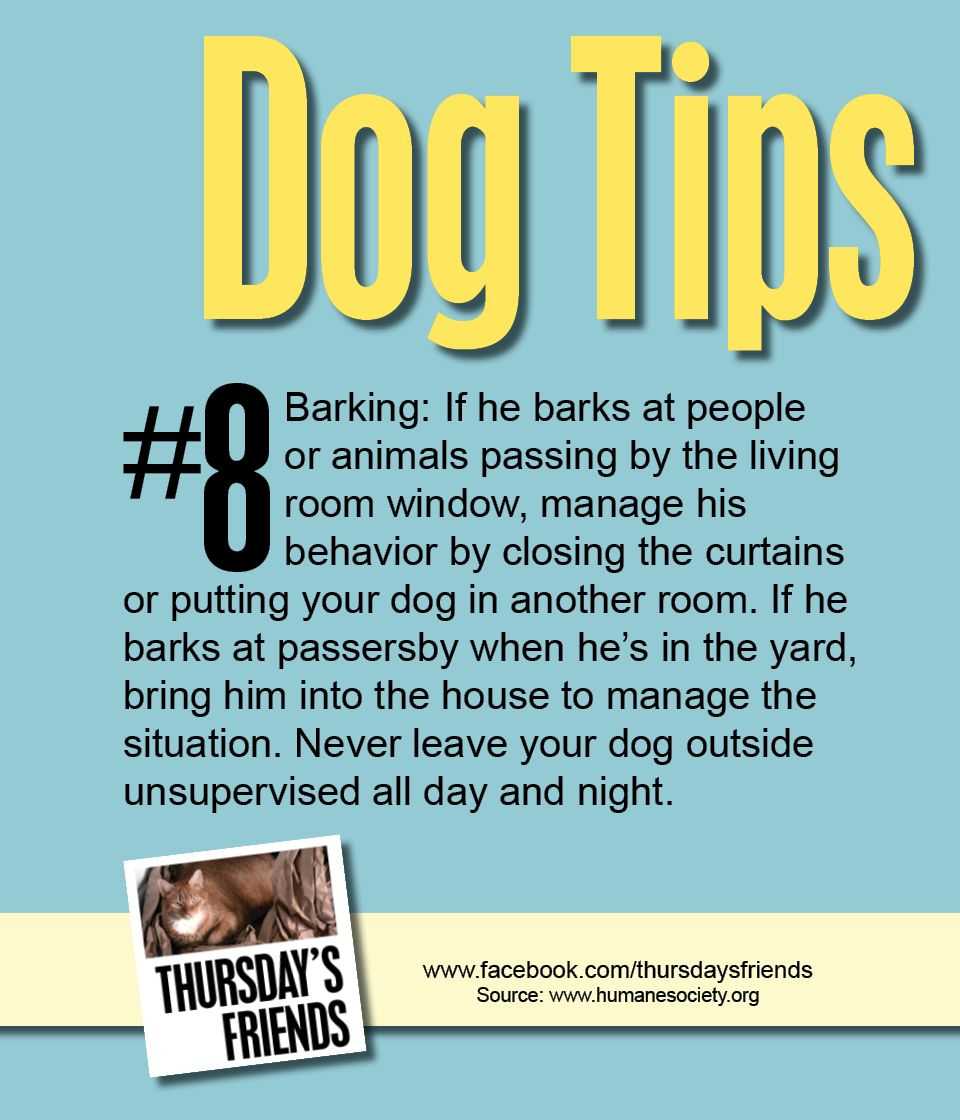 Dog Tips Thursdaysfriends Facebook Dogs Puppies Dogs Dog